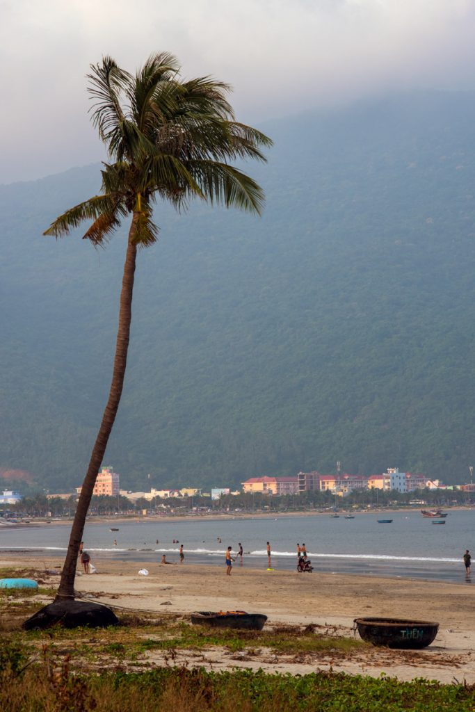 Coconut Palm, Da Nang, Vietnam