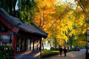 Houhai Autumn